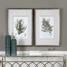 Sepia Seaweed Framed Prints, S/2