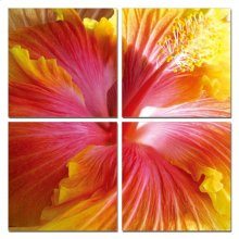 Modrest Hibiscus 4-Panel Photo on Canvas