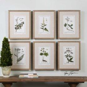 Green Floral Botanical Study, S/6