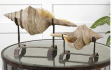 Conch Shell, Sculpture, S/2