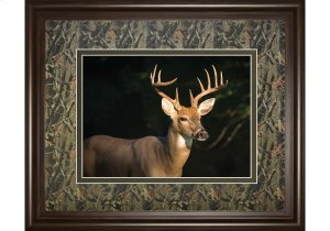 DM5556  White Tail Buck By Tony Campbell