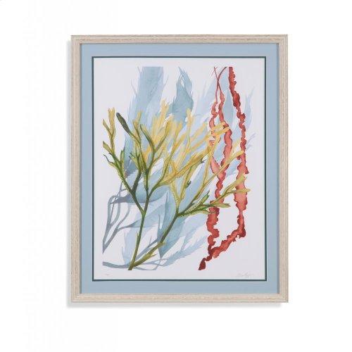 Seaweed Flow II