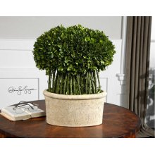 Preserved Boxwood Willow Topiary