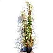 """72"""" Plume/Grass w/Pot"""