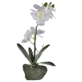 Real Touch Orchid