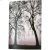 Additional Trees - Convex Pk/2