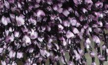 Rug, Purple colors