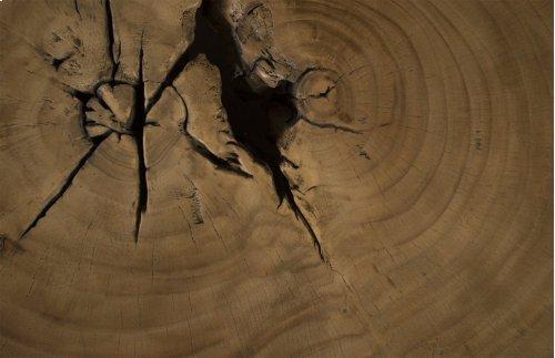 Chamcha Wood Freeform Coffee Table, Wood leg, Round