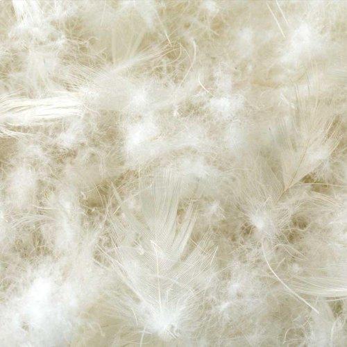 Cotton Encased Down Blend - King