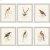 Additional Hummingbirds Pk/6