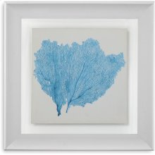 Sea Fan IV