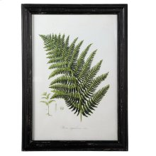 Fern Botanical Wall Decor with Glass.