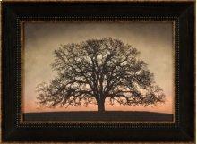 Majestic Oak
