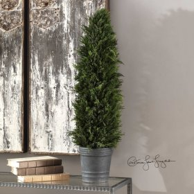 Cypress, Cone Topiary