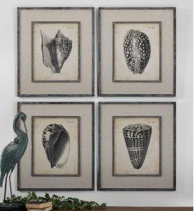 Vintage Diderot Shells, S/4