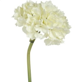 Hydrangea - Cream