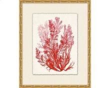 Azure Ocean Herbarium 5