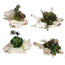 S/4 Maline Succulent