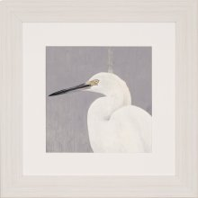 Seabirds Thoughts I