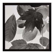 Xray Leaves III
