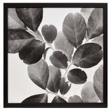 Xray Leaves I