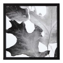 Xray Leaves II
