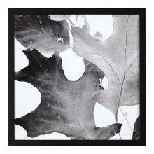 Xray Leaves II