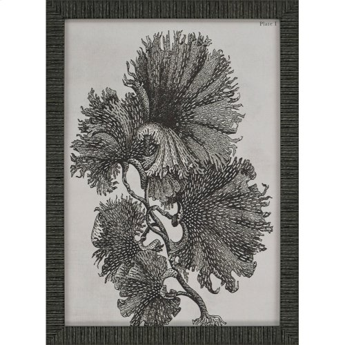 Noir Botanicals Pk/6