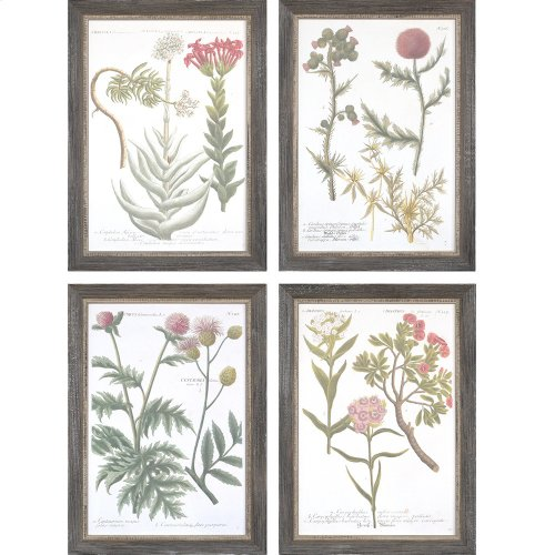 Botanical Varieties Pk/4