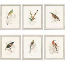 Hummingbirds Pk/6