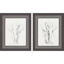 Elephants Pk/2
