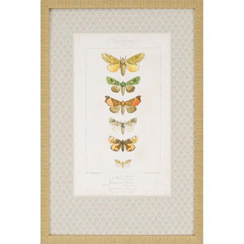 Butterflies Pk/2