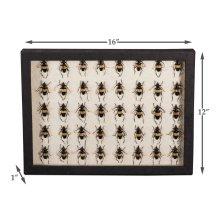 Black Collection Box, Beetles