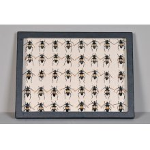 Black Collection Box, Beetles