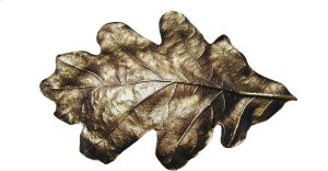 Oak Leaf - Antique Brass Product Image