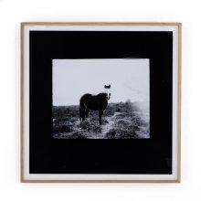 Blank Horse By Annie Spratt Framed Paper