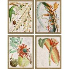 Tropical Variety Pk/4