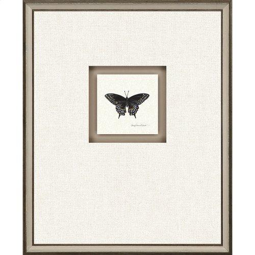 Butterfly Study I Pk/4