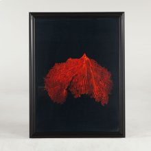 Peinture Wide Red Coral Art Photo