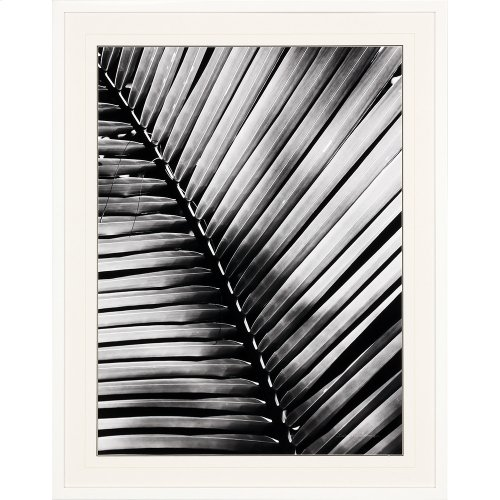 Palm Frond I
